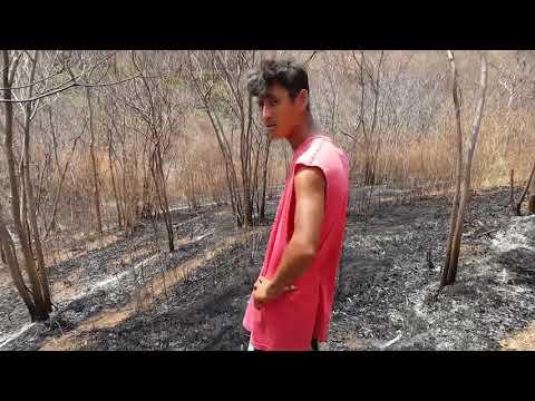Esan videoraportti naapurin aiheuttamasta pienestä metsäpalosta toukokuussa 2017