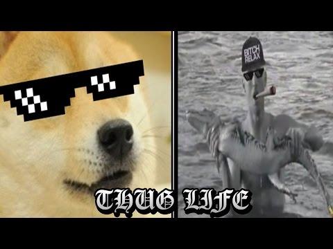 LOS MEJORES THUG LIFE  videos de risa