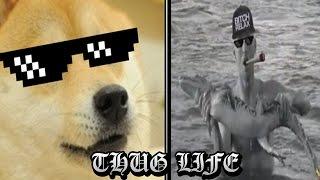 LOS MEJORES THUG LIFE| videos de risa