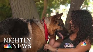 Nonprofit Changing Lives With Service Dogs For Veterans And First Responders   NBC Nightly News