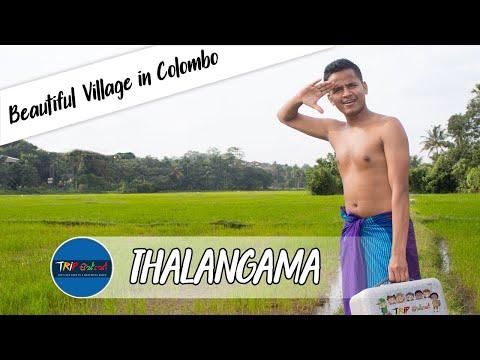 Thalangama Lake & Village   Travel with Ashen VLOG#25 thumbnail
