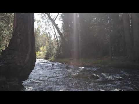 New Creek Video