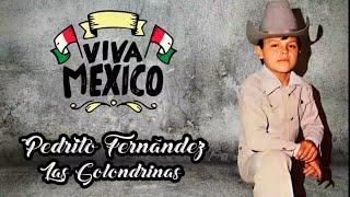 Pedrito Fernandez Las golondrinas