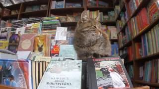 Кошки в Украине продают книги и помогают рожать