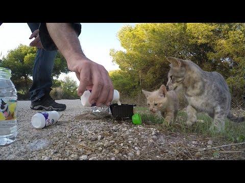 Saving street Cats in Roche Spain - Die Katzen von Roche
