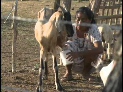 Colombia: Wayuu women's gold-water