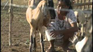Colombia: Wayuu women's gold-water