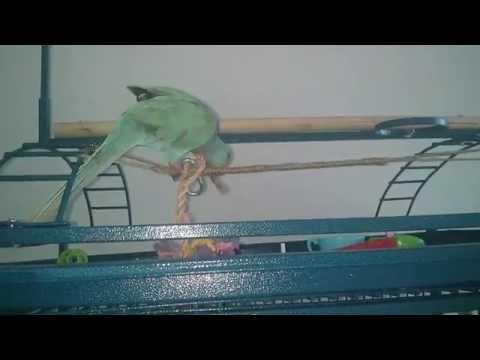 Hu-bird on a wire