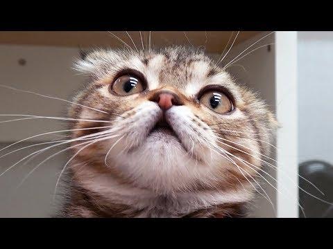 아기 고양이 혼빼서 발톱 깎는 법 [크림에스테틱]