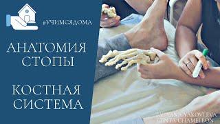 Анатомия стопы. Костная система. Татьяна Яковлева