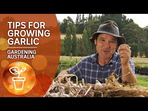 Tips for growing garlic from a guru