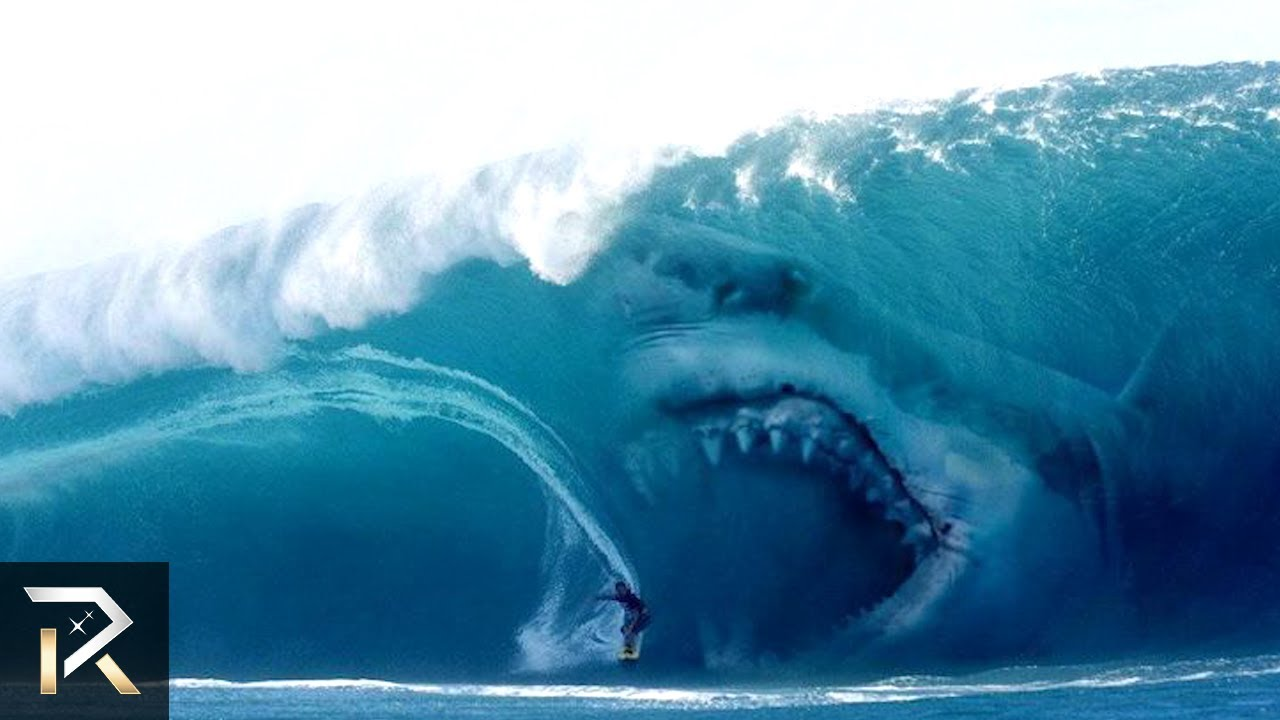 Shark Week Amazing Sharks You Need To See