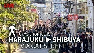 Harajuku to Shibuya via Cat's Street thumbnail