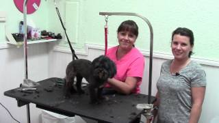 Pet Spa Groomer for your Small Dogs and Cats Palm Harbor FL 34684