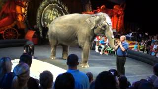 Circus Ringling Bros and Barnum & Bailey .wmv