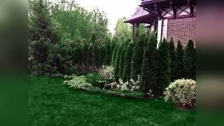 Озеленение и благоустройство территории – посадка растений