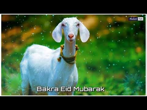 Download Qurbani Qurbani Maula kar le Kabool Bakra Eid se Ibrahim Sunnat Qurbani Karenge der se Karenge