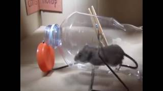 latest technical videos