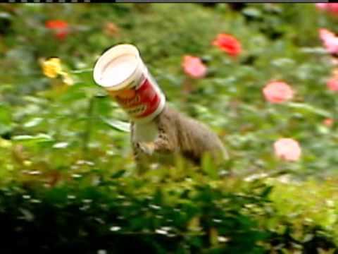 Squirrel Stuck In Yogurt Cup Youtube
