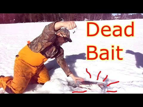 Ice Fishing - Dead Bait Tricks