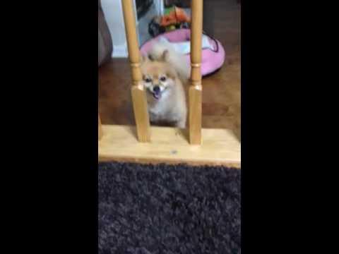 Zoey escapes!