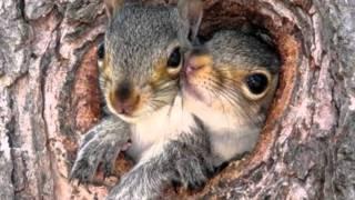 Подборка фото диких животных в естественной среде обитания