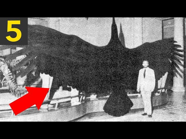 Top 5 LARGEST Birds in History