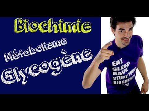 Cours de biochimie: Le glycogène