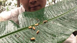 """【生食】野生のゾウムシは学校給食の""""アレ""""の味 インドネシアで遭難#2"""