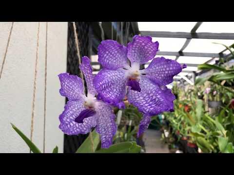 Мои методы борьбы с вредителями орхидей 🐜🐌🐛🐾