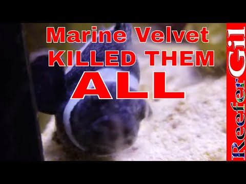 Velvet Killed All My Fish!