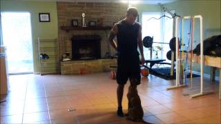 Competition Obedience With Puppy Tampa Bay