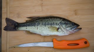 Largemouth BASS Catch and Cook