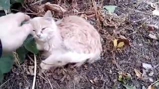 Бездомный котенок  Шуша