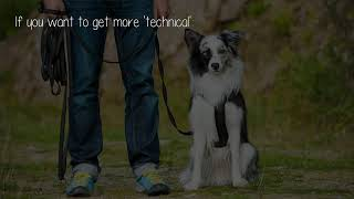 What Are The Best Dog Training Books?