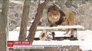 Привітання та подарунки: у столичному зоопарку відсвяткували 8-річчя трьох левиць і лева