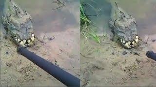 Anh đi dọc bờ sông phát hiện cá 'răng hô' kỳ lạ, tiến lại gần, nó quay đầu khiến anh sợ hãi bỏ chạy