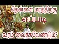 How to place proper fertilizers for coconut tree   Agriculture Videos  Tamil Culture