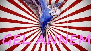 Papağan Ve Muhabbet Kuşu Gel Annem Konuşma Eğitim Sesi Hazır Ses Kaydı 1 Saat