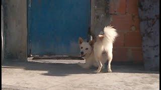 Roda roda cachorro aqui