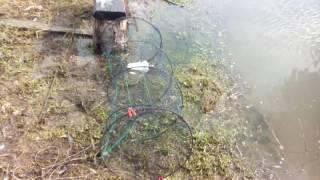 Рыбалка вершей Установка верши!Переселение рыбы!Ловля карася!Разведение рыбы!