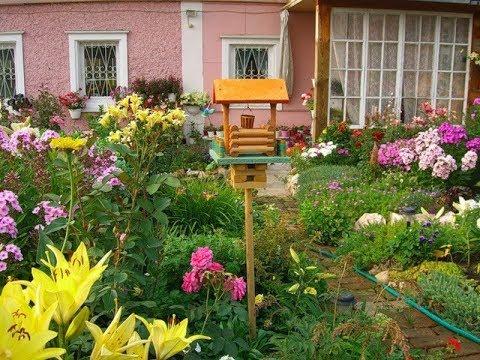 Секретные трюки садовницы с 20-летним стажем: Какие растения посадить на дачном участке