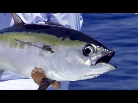 "Saltwater Experience: ""Tuna With Walker"" Season 8 
