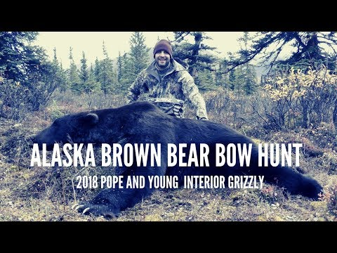 brown-bear-hunting-in-alaska---bow-hunt-p&y-grizzly-bear