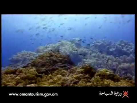 Marine life in Oman