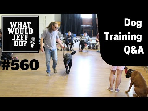 Dog Training - Leash Training Dogs - Swimming Dogs- What Would Jeff Do? Q&A  Ep.560 (2019)
