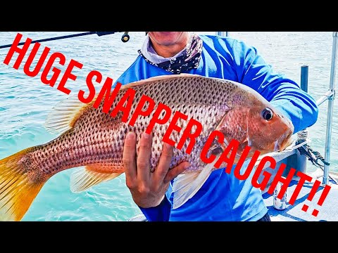 HUGE SNAPPER CAUGHT! Southern Waters Offshore. Sea Charter 1, Captain Daniel. Grouper Hunting!!