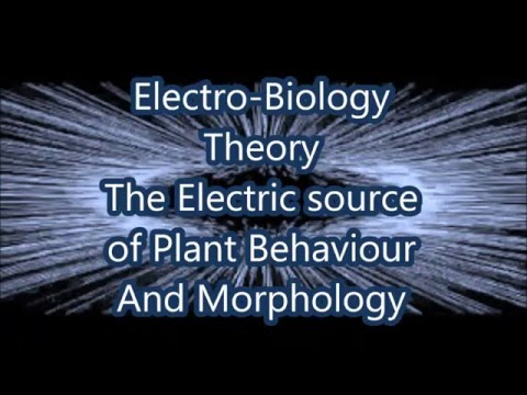 Electro Biology Theory - Electricity as the Route of Plant Morphology