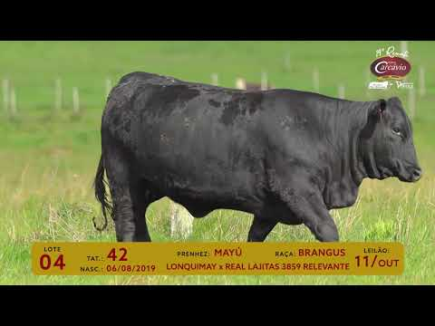 BRANGUS - LOTE 04   TAT 42