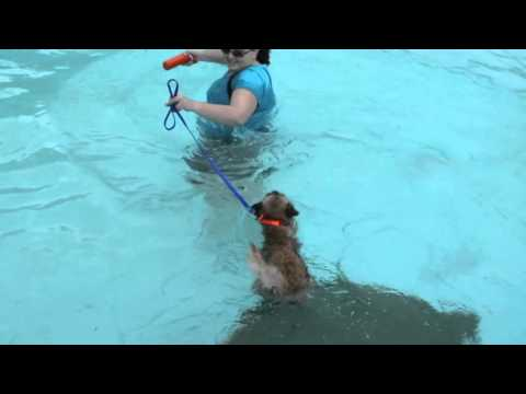 Teaching Dogs That Don't Like Water To Love Swimming!